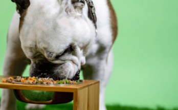 General feeding guideline for dogs